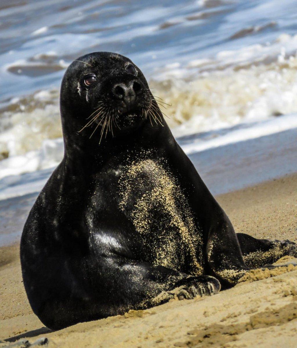 как выглядят тюлени фото