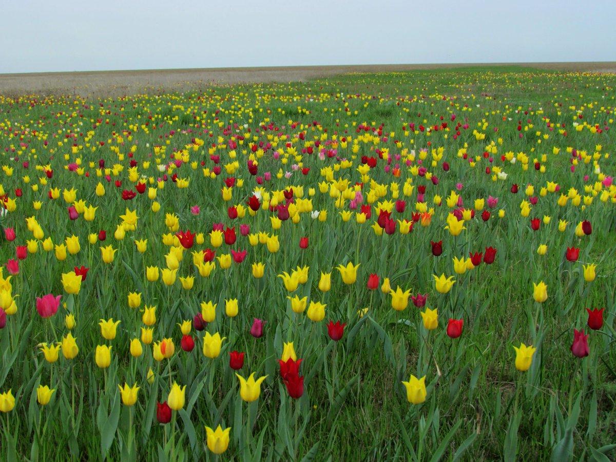 пожалуй, самый расцветай мой край калмыкия фото русские