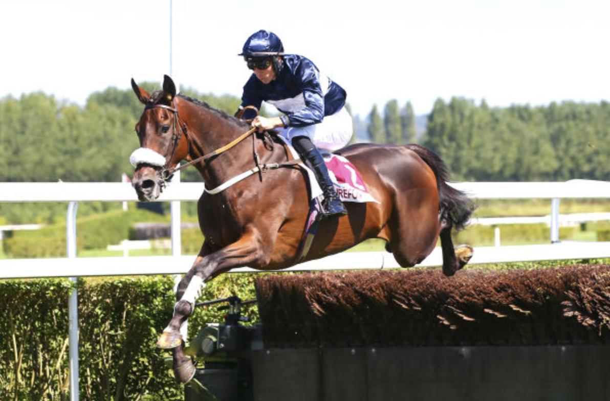 Arqana :: Pur-sang - Ventes aux enchères chevaux