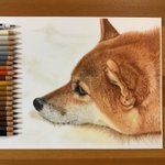 もふもふ感が伝わってくる?色鉛筆で描いた犬の絵のクオリティが高い!