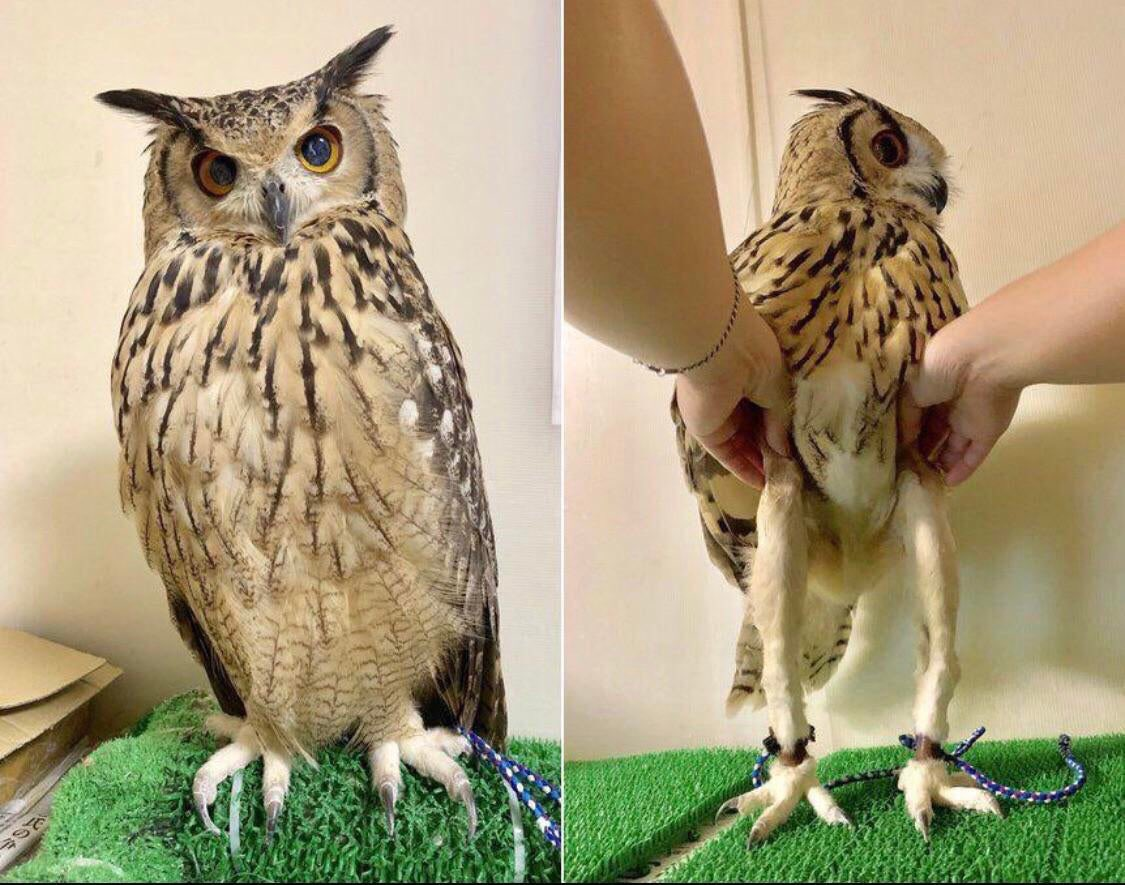 I was today years old when I learned how long owl legs are! 🦉