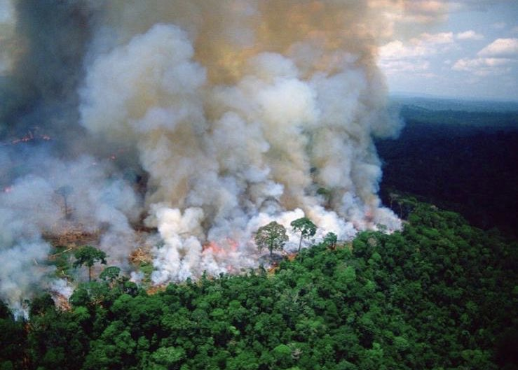 The leading cause of the Amazon's deforestation is cattle ranching and wild fires are deliberately started in an effort to support this. Between Jan and Aug, Inpe detected 74,000 of them!   Animal agriculture is responsible for 18% of greenhouse emissions... <br>http://pic.twitter.com/nAsT0kELTj