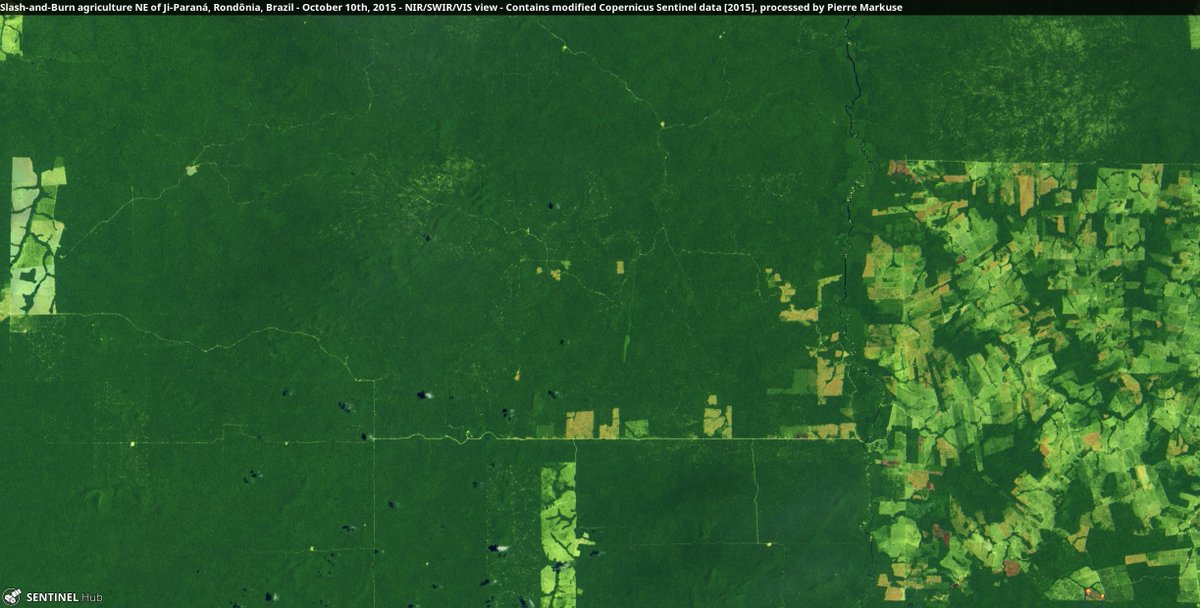 Thread! - #Deforestation in Brazil by Slash-and-Burn agriculture. Here you can see an area NE of Ji-Paraná, #Rondônia, #Brazil in October 2015. Already established are a few roads and plots that are already deforested. Image is 48 kilometers wide. #RemoteSensing 1/5<br>http://pic.twitter.com/oSxDxdfZue