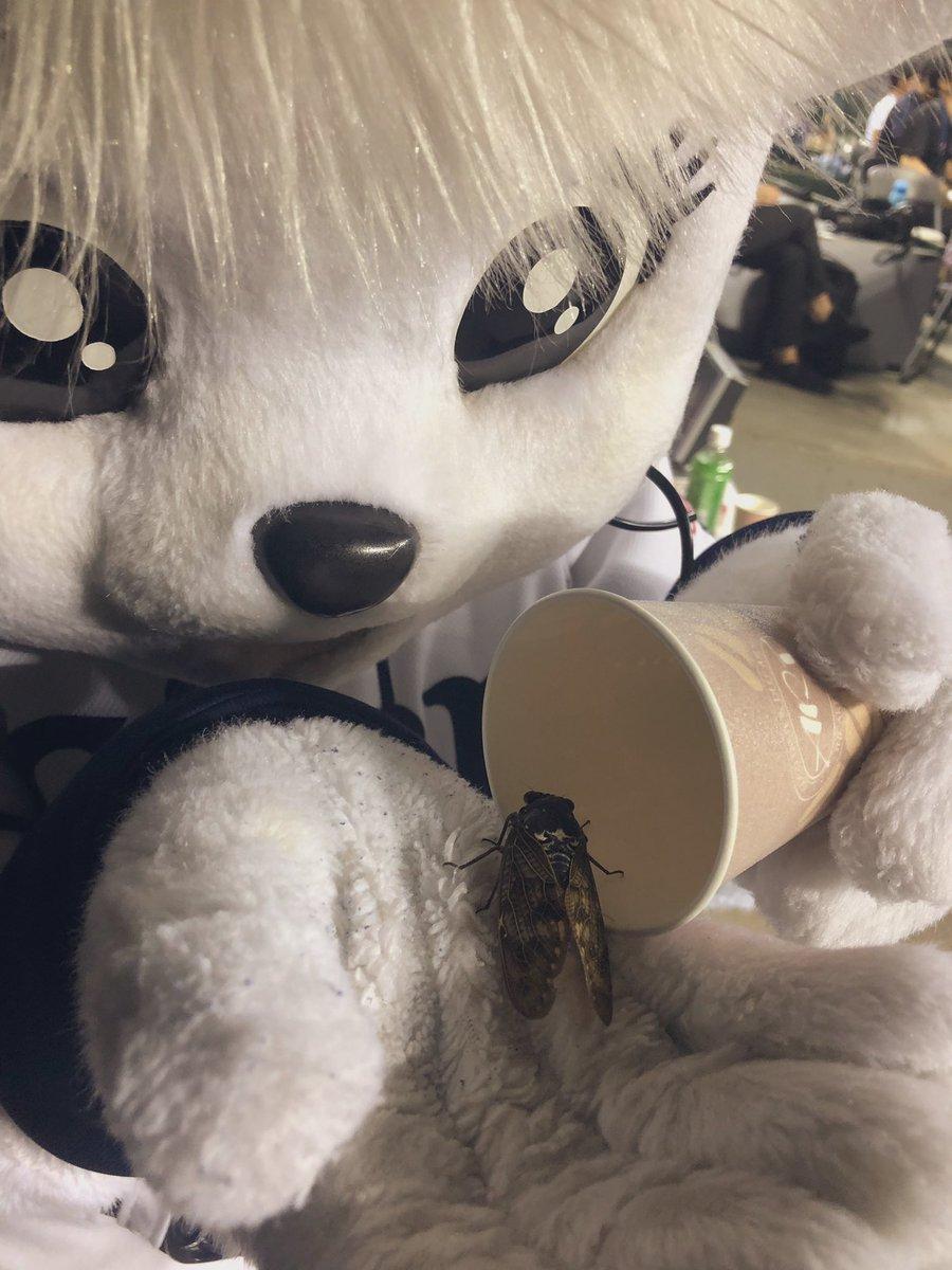 せみも いっしょに おうえんちゅう‼︎‼︎せみの だいひょうで きてくれました。ぜったい かちたい!!メットライフドームのまわりの せみさん!いっしょに おうえんしよーっ‼︎#seibulions #埼玉西武ライオンズ