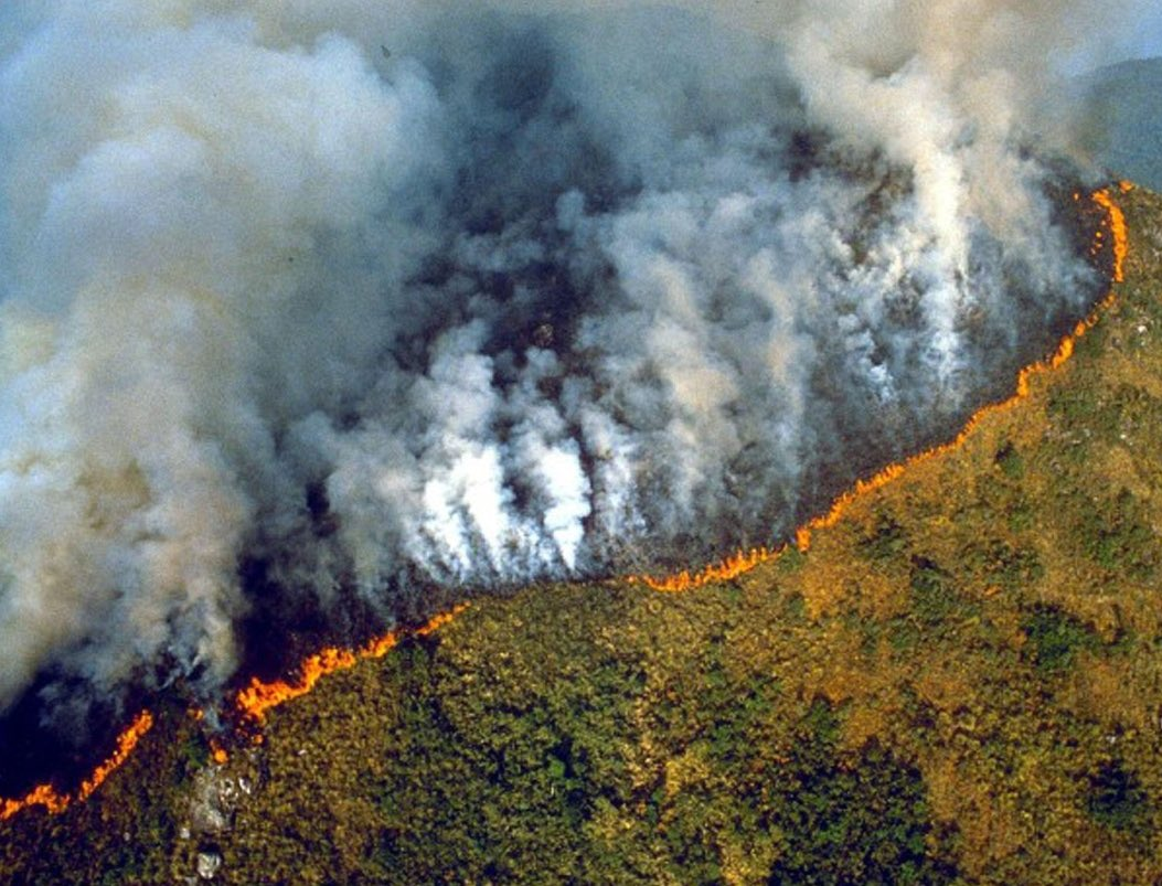 There was worldwide outcry when the Notre Dame cathedral was on fire. Why is there not the same level of outrage for the fires destroying the Amazon rainforest? We have ways we can help: Please, visit fal.cn/33zRP @wwf_uk #FightForYourWorld
