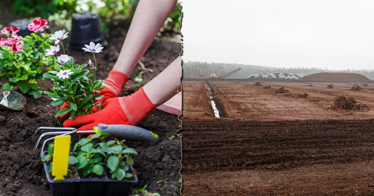 A reminder to tune into @ITVTonight at 7.30 - @Chrisitv looking at, among other things, the sale of #peat in our garden centres & how its literally costing us the earth. Our @JennyHPlantlife explains more in the programme @Love_plants has peat info here: plantlife.org.uk/uk/our-work/ca…