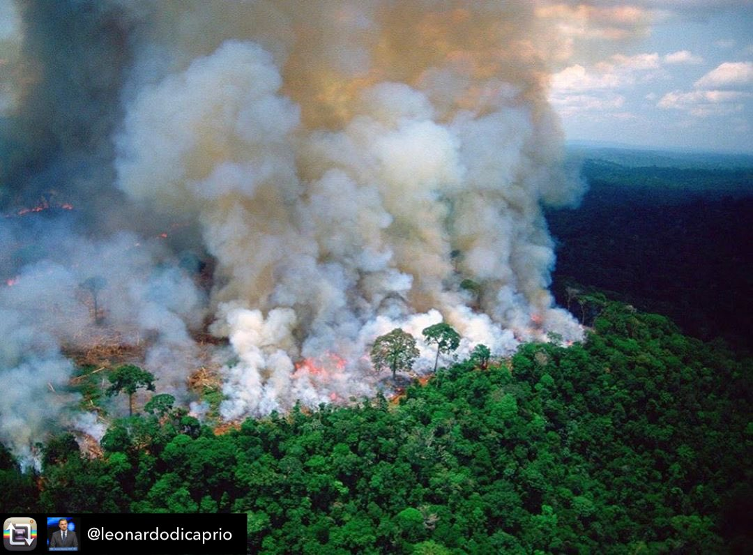 from @LeonardoDiCaprp Terrifying to think that the Amazon is the largest rain forest on the planet, creating 20% of the earth's oxygen, basically the lungs of the world, has been on fire for the last 16 days running, with literally NO media coverage whatsoever! Why?