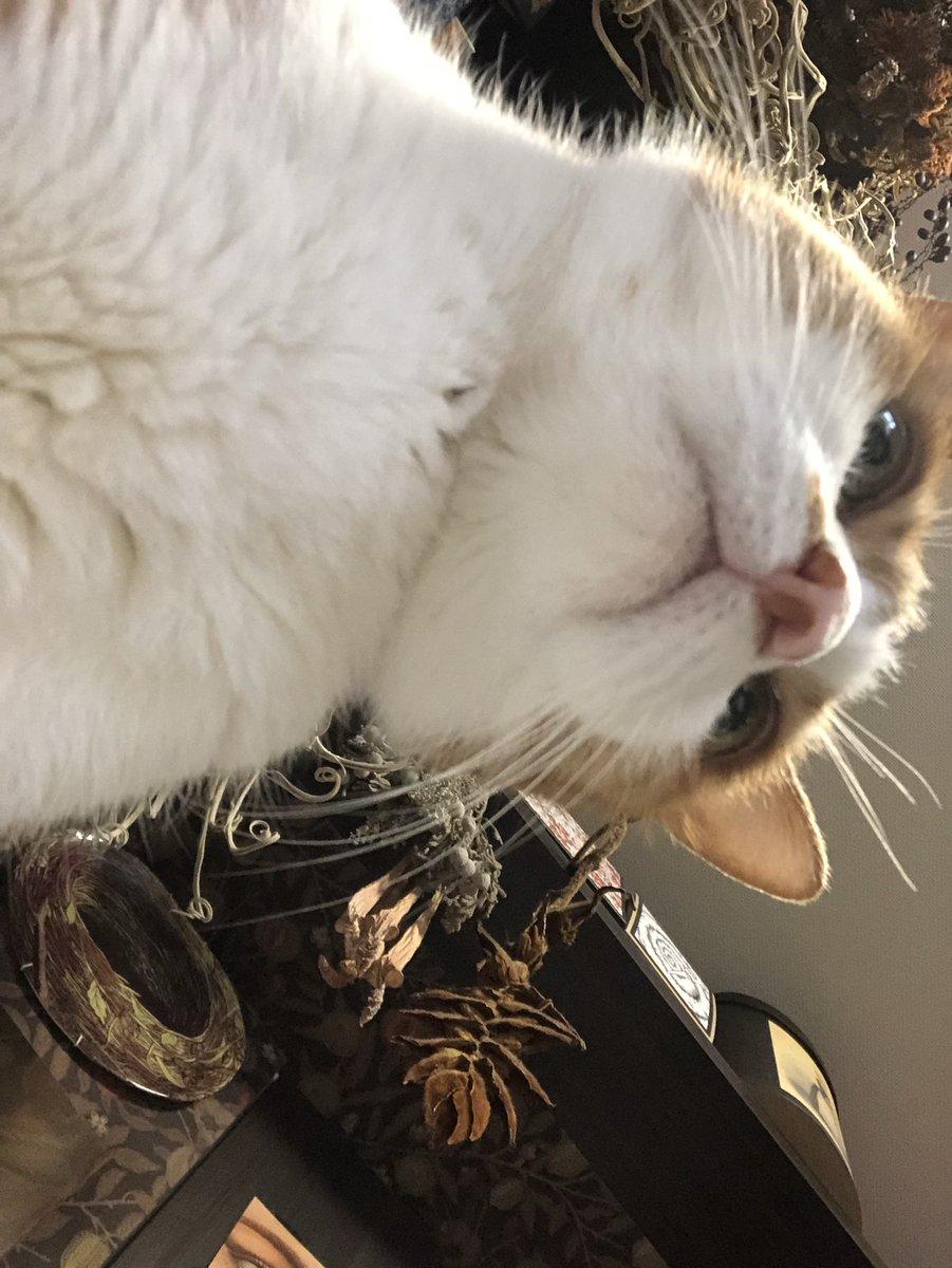勤務中の猫を下から撮影