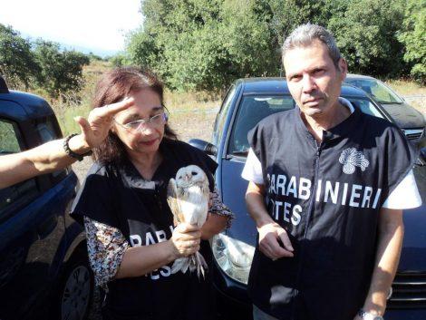 Acireale i carabinieri forestali liberano 3 barbagianni nella riserva Bosco della Aci - https://t.co/iBM4SeVEvQ #blogsicilianotizie