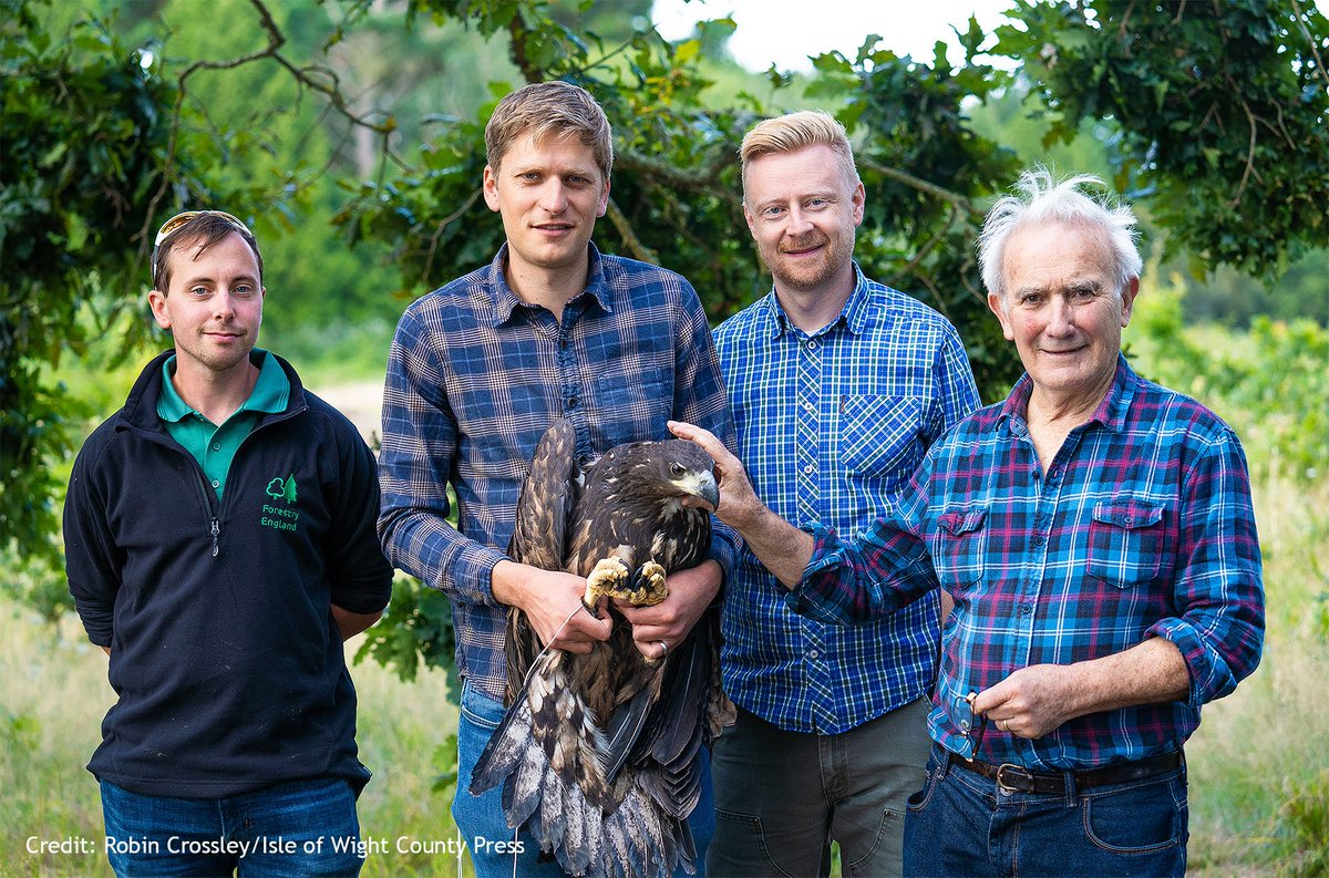 Were thrilled to have released six juvenile White-tailed Eagles on the Isle of Wight, in partnership with @ForestryEngland. This is the first part of a five year project to reintroduce the species to southern England after an absence of 240 years. roydennis.org/first-white-ta…