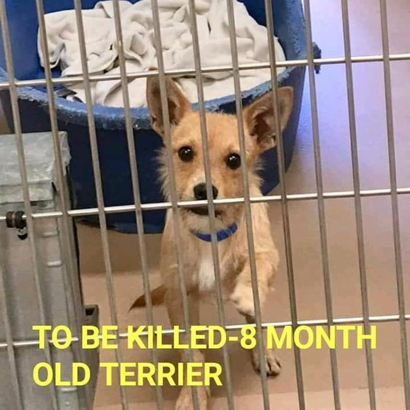 """""""BISCUIT"""" IS VERY SCARED IN THE SHELTER. HE CRIES AND WHIMPERS. HE IS APPROX.8 MONTHS OLD, A TERRIER BLEND!HE IS SUPER SMART AND VERY AFFECTIONATE.  HE IS AVAILABLE AT: RIVERSIDE COUNTY ANIMAL CONTROL,  COACHELLA SHELTER, THOUSAND P PALMS, CALIFORNIA #A1543098 CALL(760)-343-3644<br>http://pic.twitter.com/oqxoEPY92T"""