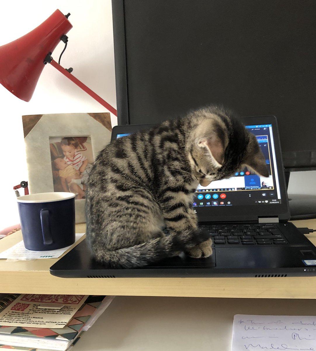 Skype conf call proving difficult. Meet Boy, our new kitten<br>http://pic.twitter.com/NTE4mdxrUE