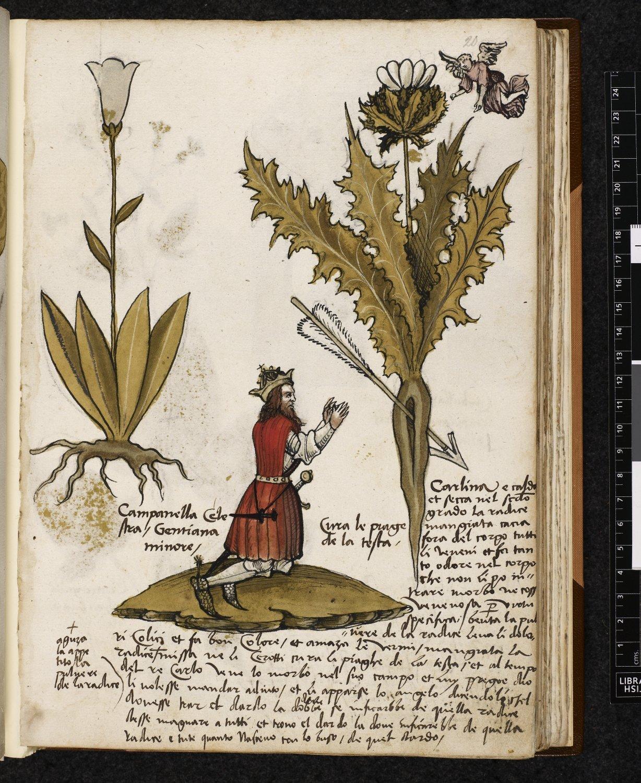 более древние травники лечебники картинки зато благодаря овладению