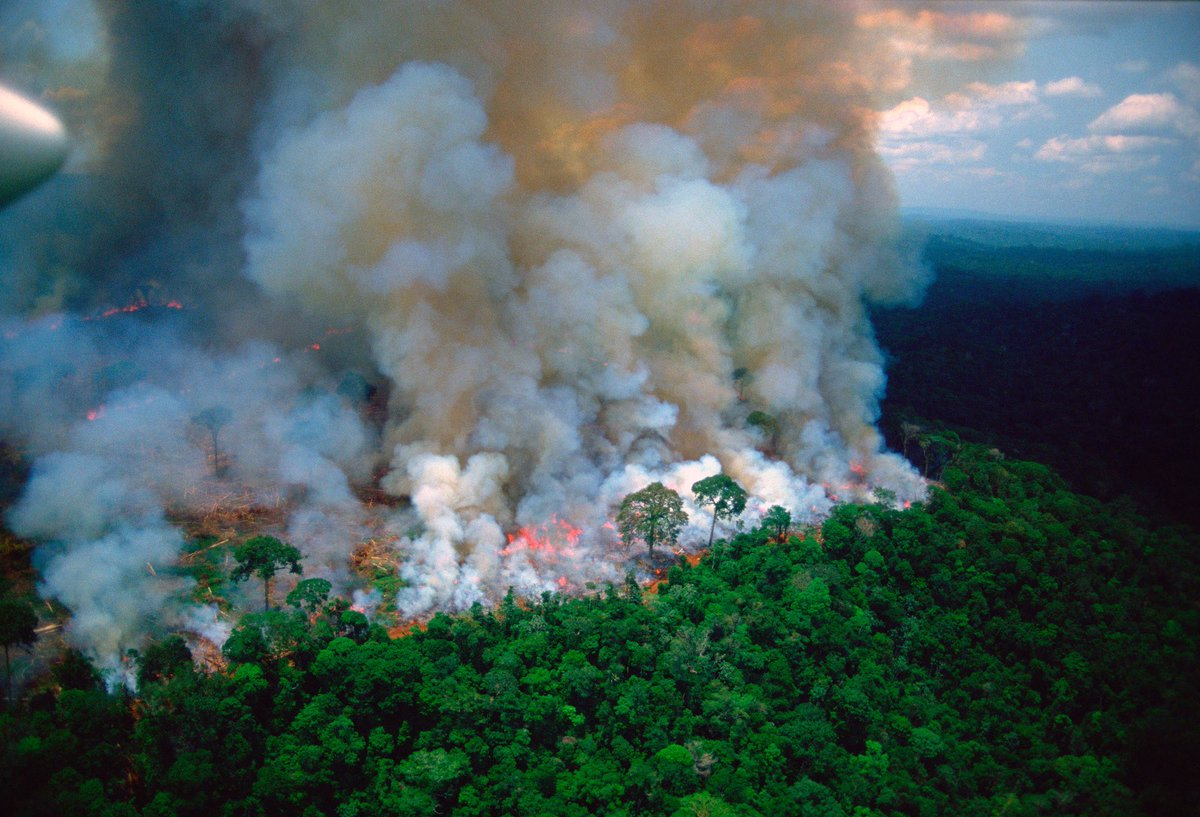 Image result for The fire in Amazon's forests G-7