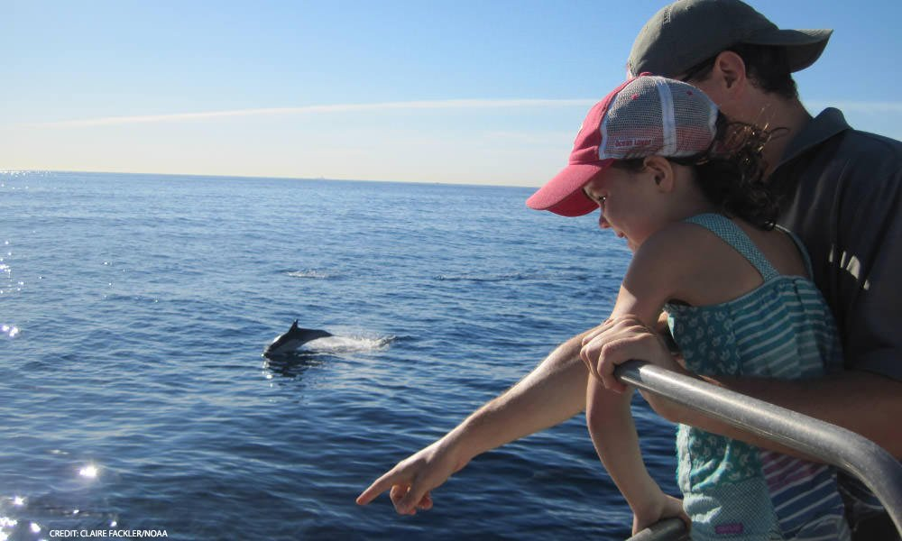 A young child learns views dolphins in the ocean from a safe distance.