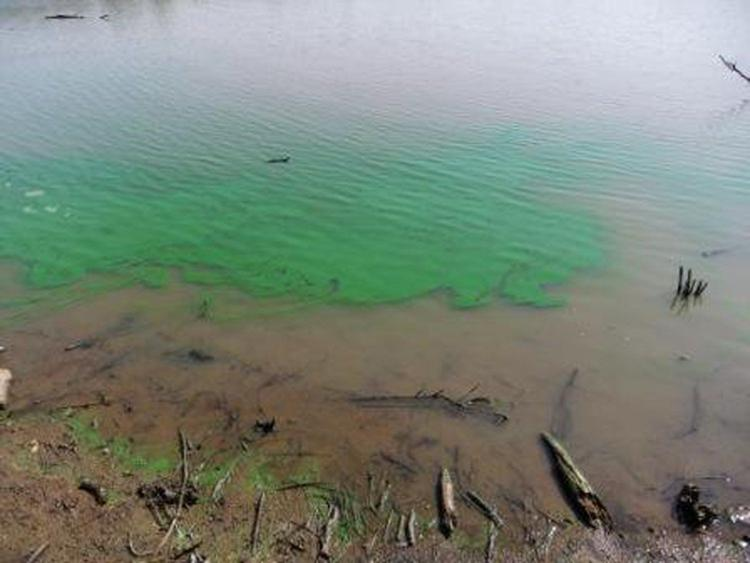 Residents warned of blue-green algae blooms that threaten pets and people https://t.co/BDydxkCXVM https://t.co/STfGUsKH0g