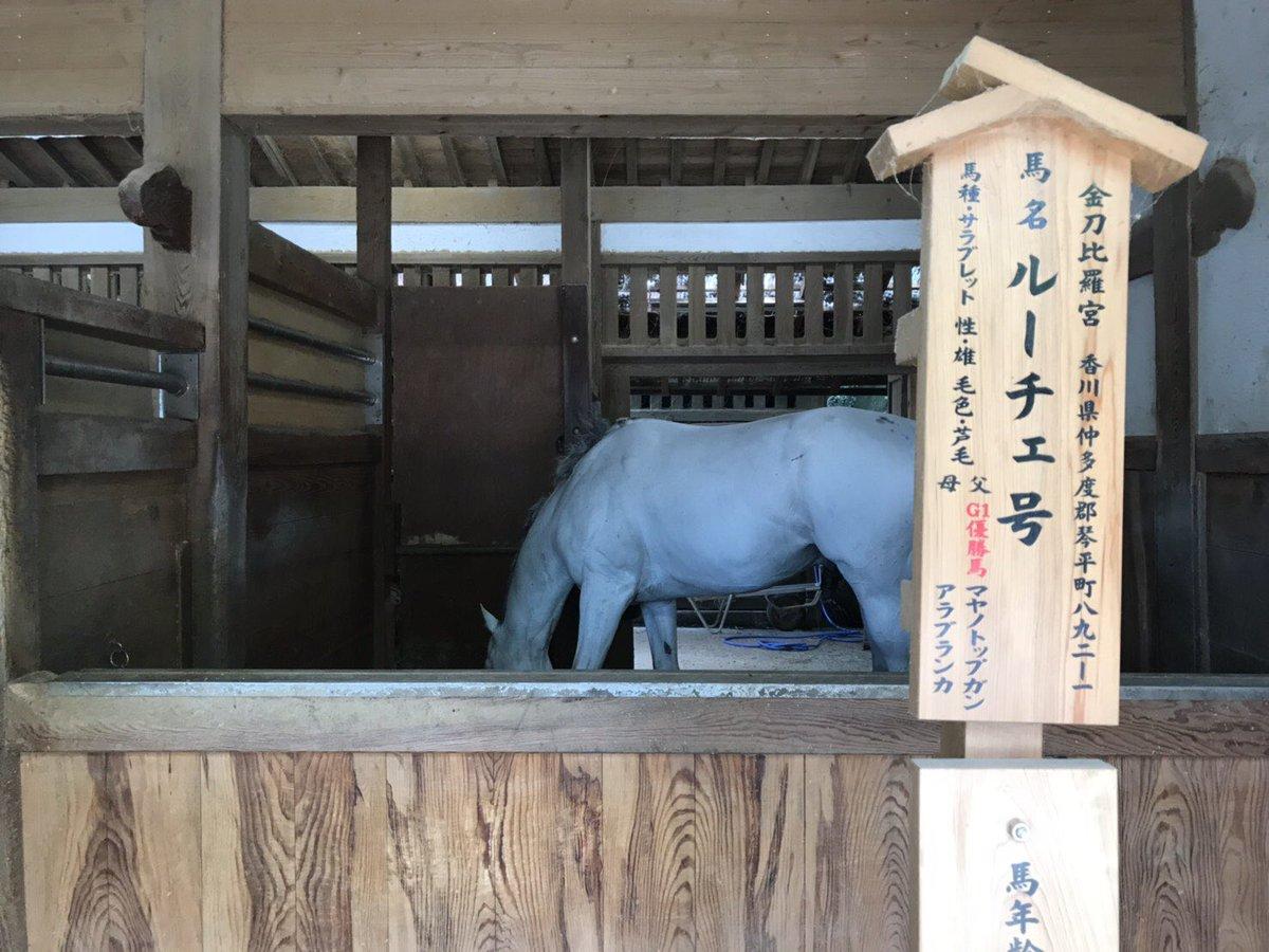 神馬となったマヤノトップガン産駒ルーチェ号。 現役時代は地方で106戦13勝という成績を残しました。 ちなみに伯父のドラゴンキャプテン(父アンバーシャダイ)は2006年アルゼンチン共和国杯で3着と好走しています。鞍上は今やオジュウチョウサンとのコンビで大人気の石神深一騎手でした。