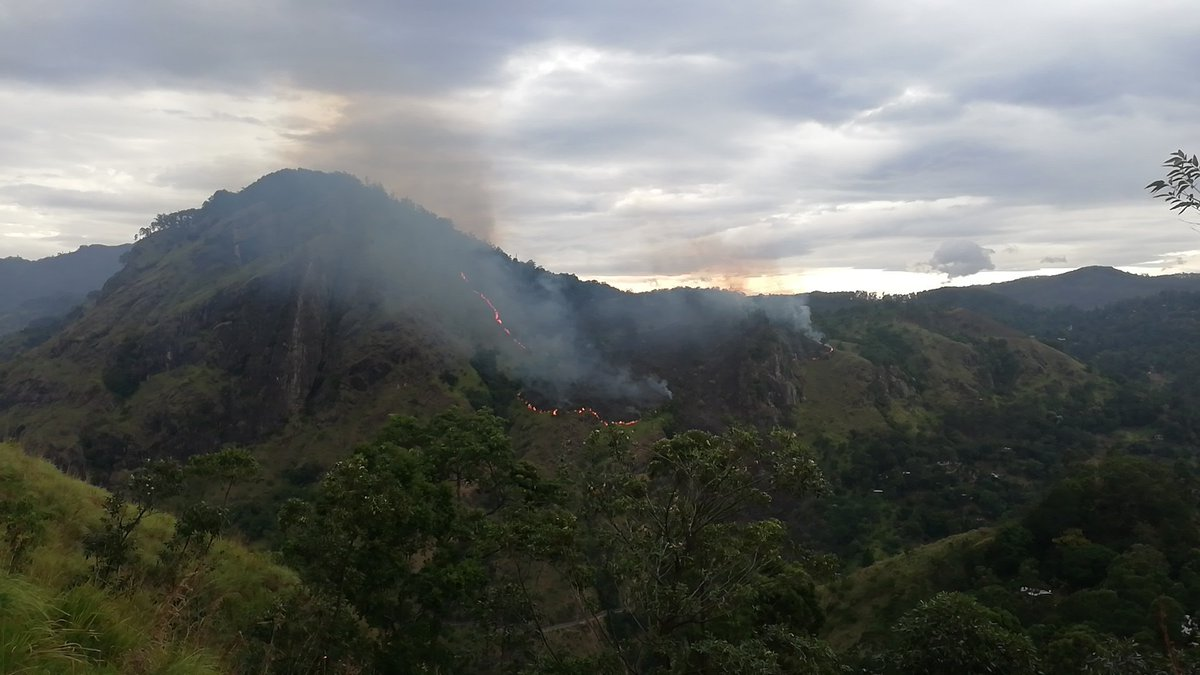 Over 20 acres so far destroyed due to Ella wildfire 🔥. Police, Army and villagers are dousing the wildfire. Dousing is challenge as difficult to reach to the location #LKA #SriLanka #Ella #Ellarock #Ellawildfire - Police / DMC