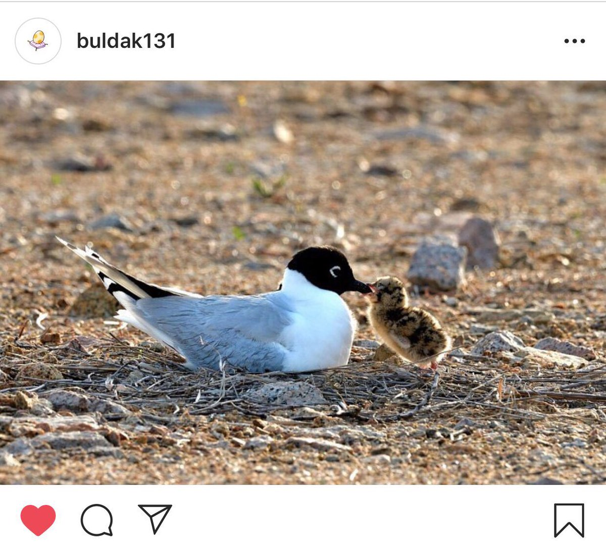 "hanbin's uncle ig update:  ""the chick went to a flying gull and asked her to teach him how to fly in the sky"" <br>http://pic.twitter.com/VcFfMp54gH"