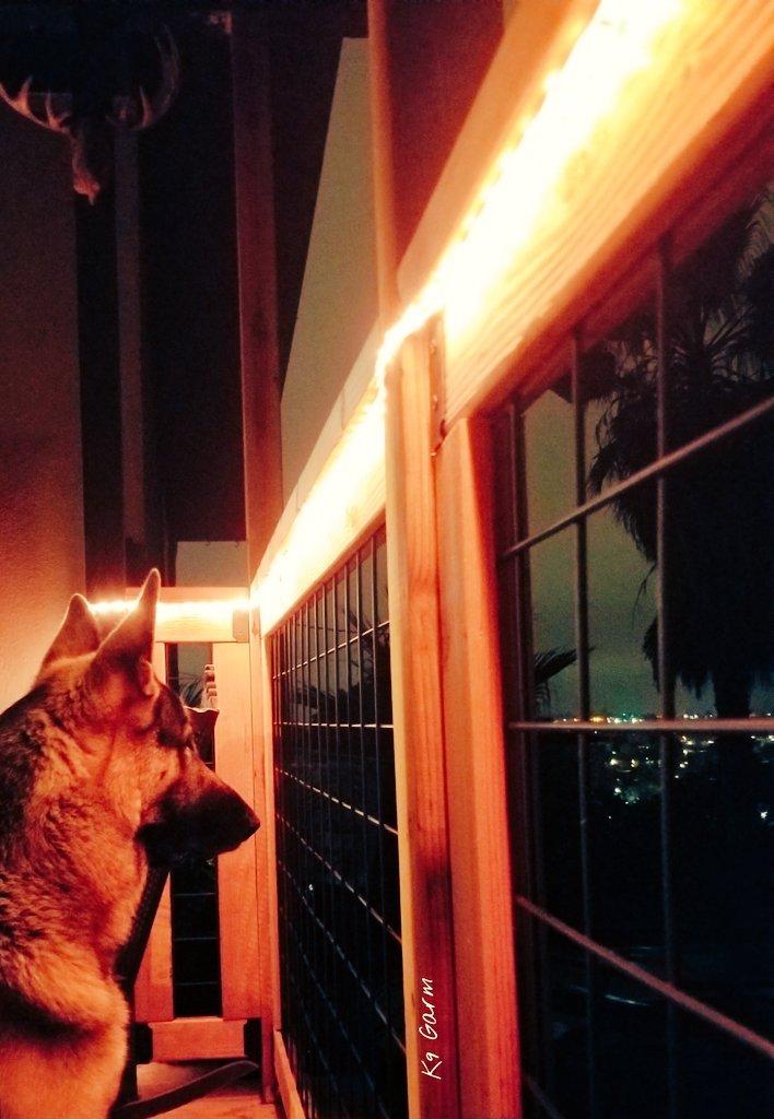 Surveying his kingdom. Gnite! #K9Garm #SARK9 #dogsoftwitter #dog #dogs #germanshepherd #gsd #moosedog #FaMoose<br>http://pic.twitter.com/vmSNUXhRjB