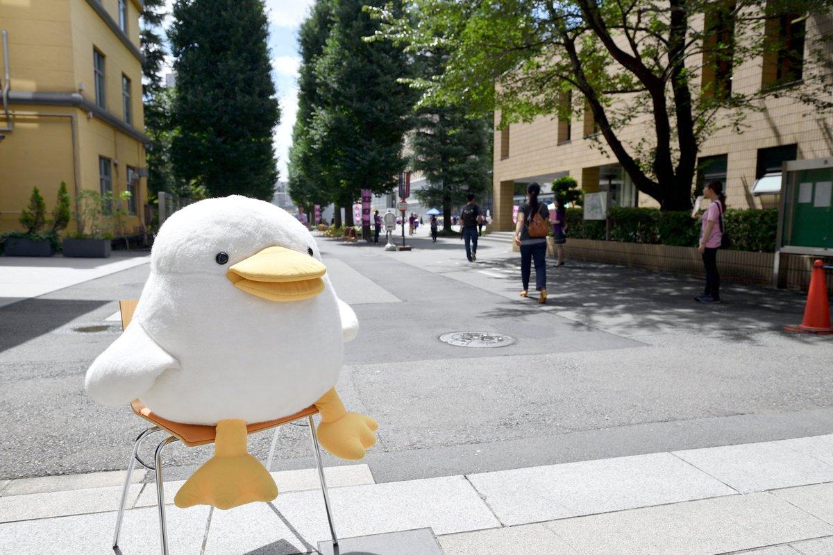 大正 大学 オープン キャンパス