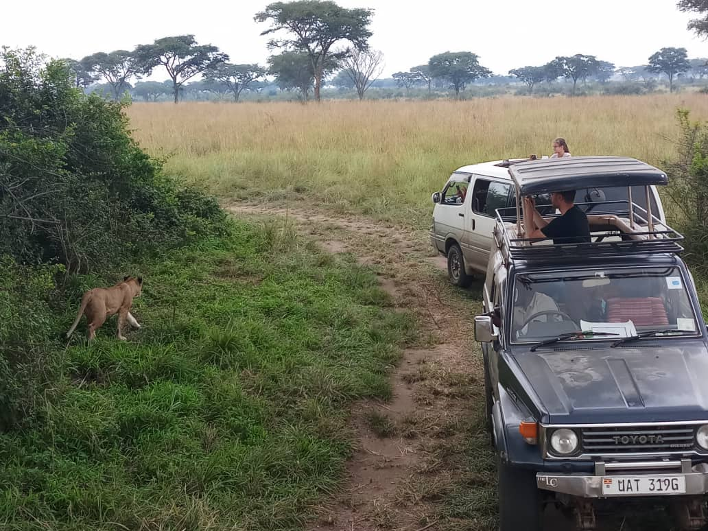 Book a safari with us and have the best and close views with wildlife  https://t.co/TlsWHTi1TL #Ugandasafaris #safarisUganda #Ugandasafari #safariUganda #Ugandatours #tourUganda #toursUganda #Ugandatour #visitUganda #Ugandasafaristours #wildjungletrails https://t.co/4YbNT7Dj3O