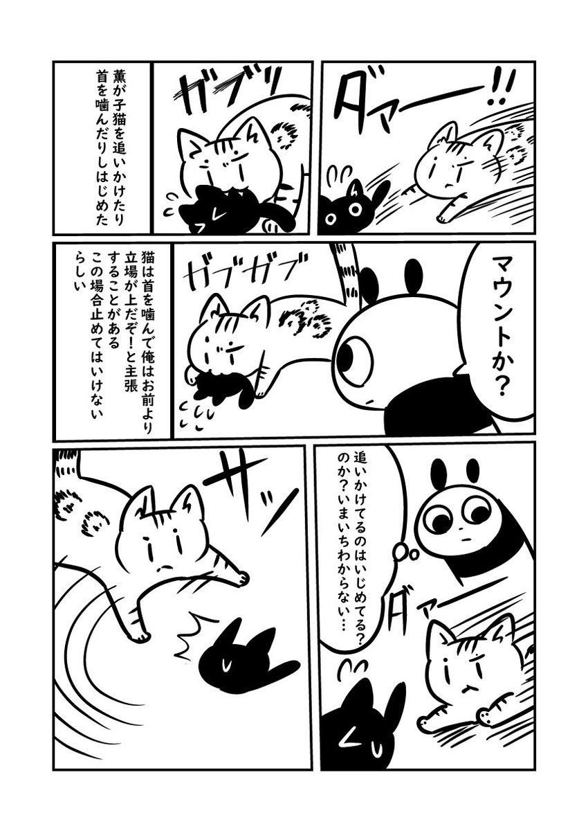 子猫が来た話 子猫特有のクソガキさを発揮し始める消し炭コロッケです #ぬら次郎日記