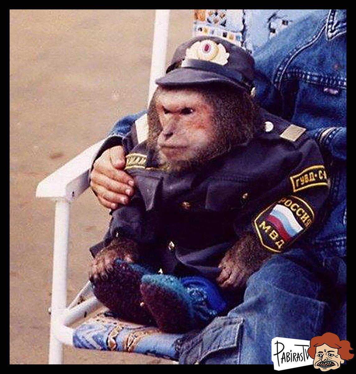 Юбилеем, смешные картинки полицейскому