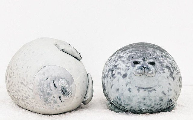 "5000RT:【海遊館が監修】""丸すぎるアザラシ""が60センチの巨大クッションに!飼育員も「(リアルすぎて)検温したくなる」「そっくり!」と驚くほどの仕上がりとなっているという。"