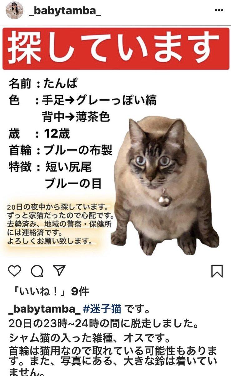 奈良県の皆さん、迷子猫を探してくださいませんか↓拡散希望です。