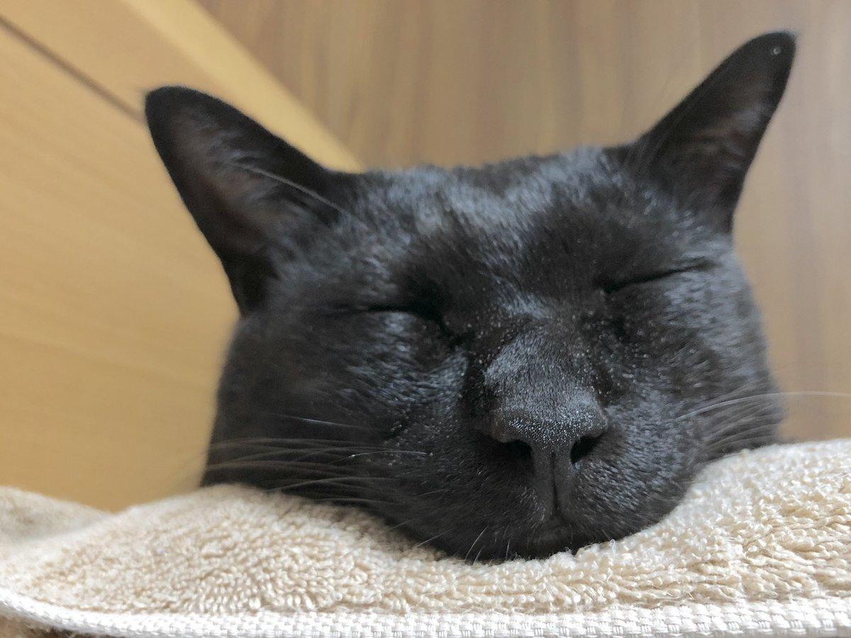 ろんさんほんとに幸せそうに寝るので起こすに起こせないんや……またわたしの枕を敷布団にしとるんや……