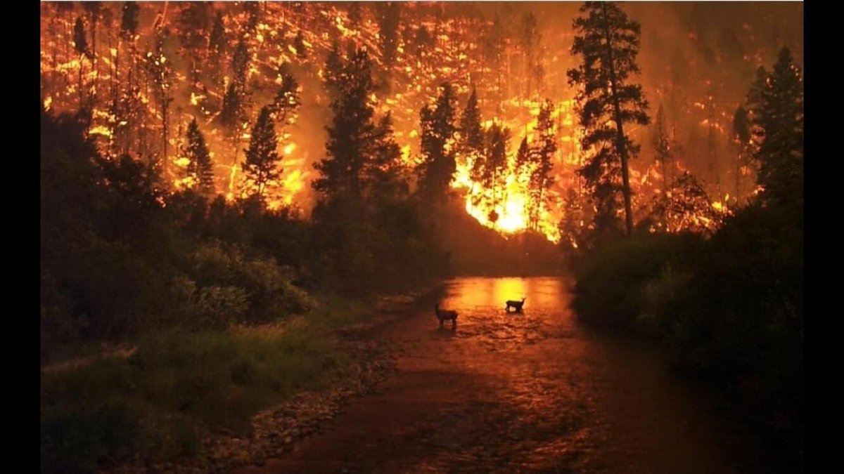 """Amazon fire is due to climatic change or human negligence n mistake!  Deforestation, mining , cooking fire! Now world""""s 20% oxygen is lost, they say. Think the plight of the animals birds n insects!  <br>http://pic.twitter.com/t81uYfeKwz"""