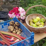 Image for the Tweet beginning: Some lovely produce in the