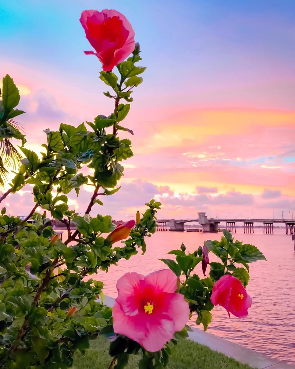 Flower power for your Friday!  #LoveFL . : Sarasota :  http:// bit.ly/31Vlh24    <br>http://pic.twitter.com/KcTI07yqh6