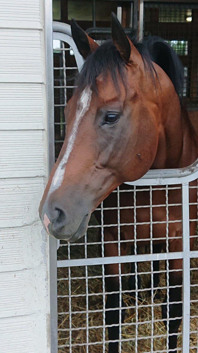 ディーマジェスティさん  太い首が印象的でしたよ。  #ディーマジェスティ #競馬 #牧場見学 #アロースタッド