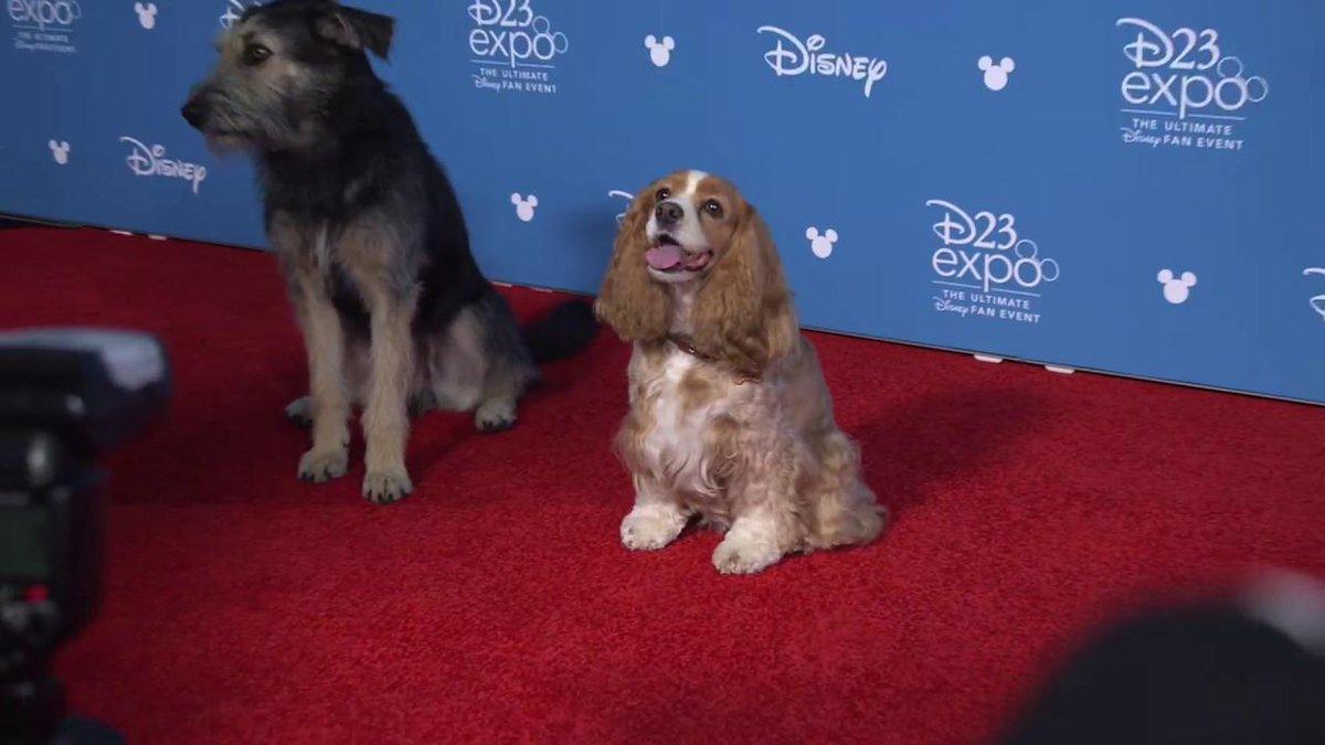 RT @SeriesBrasil: Os doguinhos Monte e Rose (A Dama e o Vagabundo) no tapete vermelho da #D23Expo.   https://t.co/1AAN5sK7HE