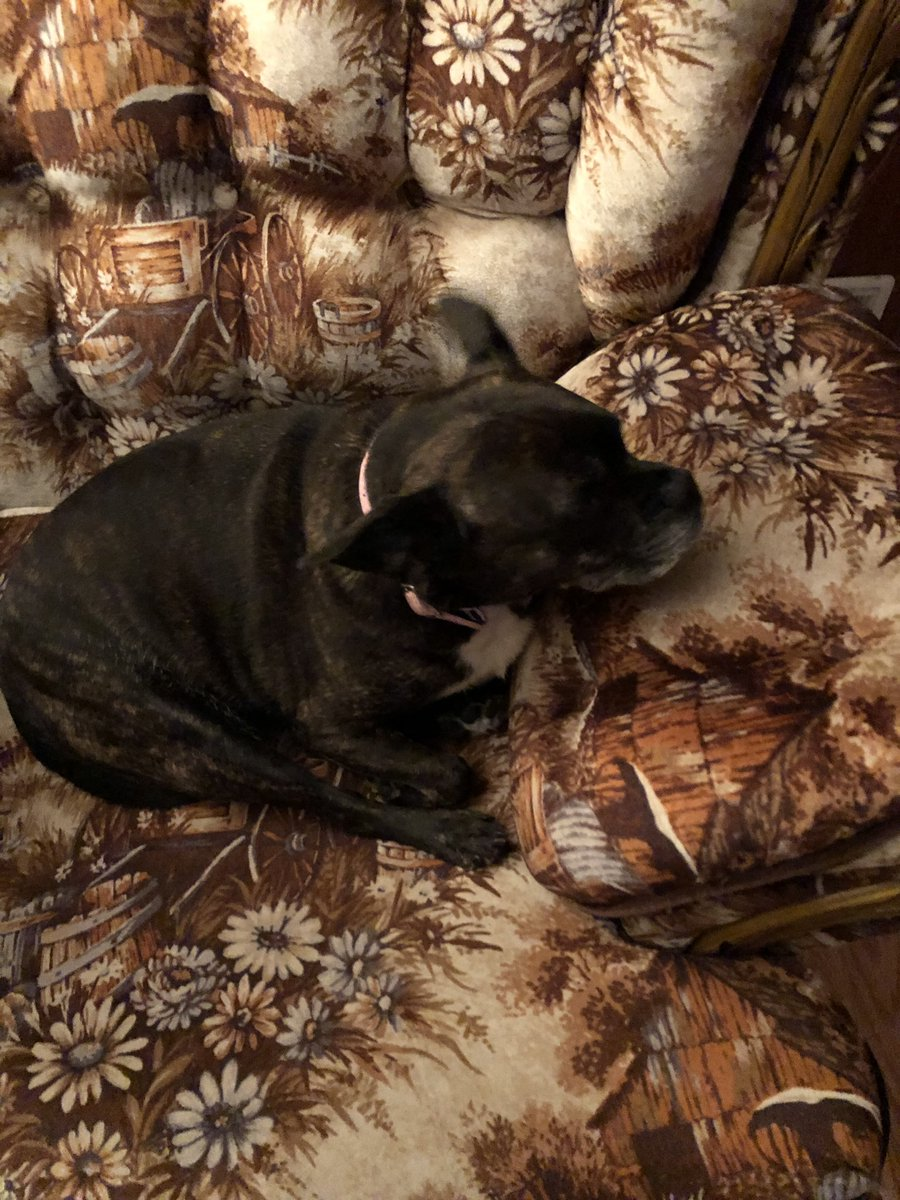 Minnie Sue loves @sassysgoodies treats!!! Fall is coming-she loves the pumpkin cakes & treats!!! 1) Minnie Sue watching #LivePD 2) My g-dog is visiting so Minnie Sue is down for the night!!! Excuse the ugly couch but was here & haven't renovated lr yet!!! <br>http://pic.twitter.com/55vBB77odA