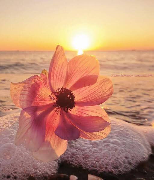 @GEdelDrake @FlowerchildRT @encarnacion67 @snowleopard56 @gamila2103 Happy weekend