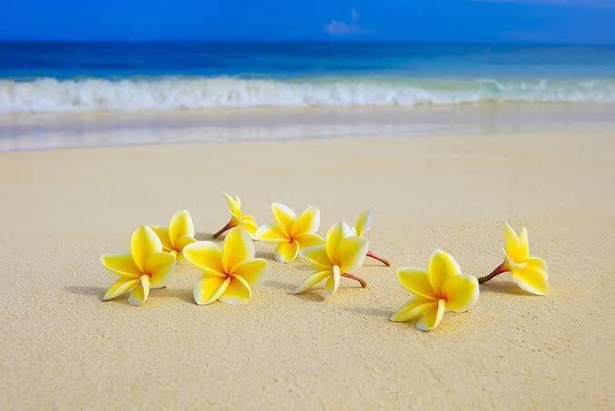 @FlowerchildRT @GEdelDrake @encarnacion67 @snowleopard56 @gamila2103 Happy weekend