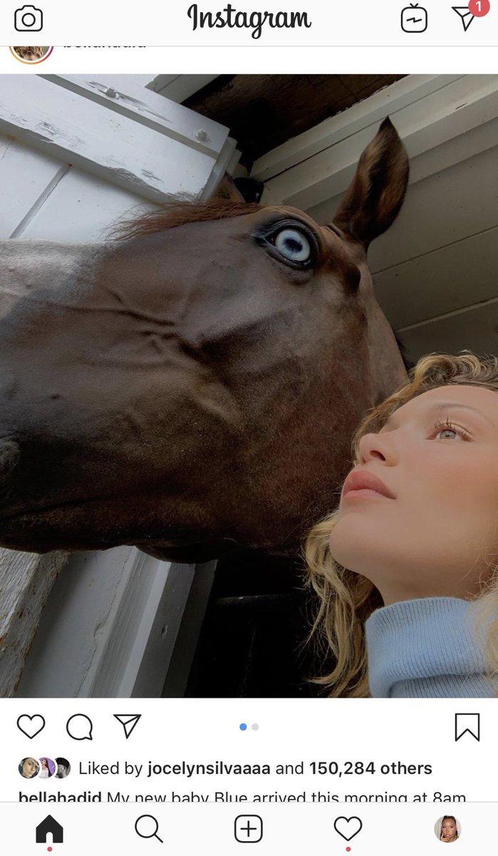 RT @haniruok: bella hadid's new horse said https://t.co/SDziomaZ3n