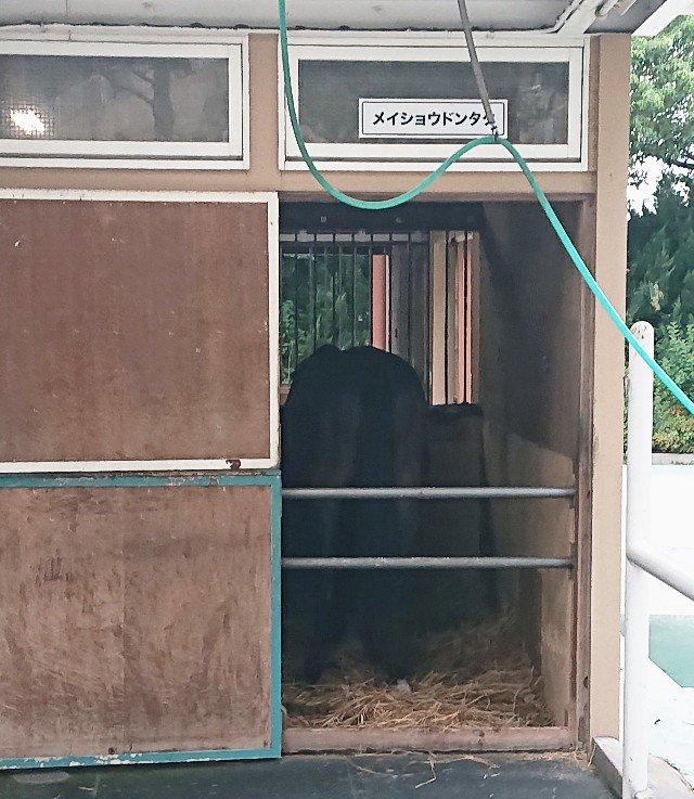 2010年 天皇賞(春) 3着馬 メイショウドンタクさんに挨拶して帰ろうと思いましたが夕飯中 残念( ´△`)