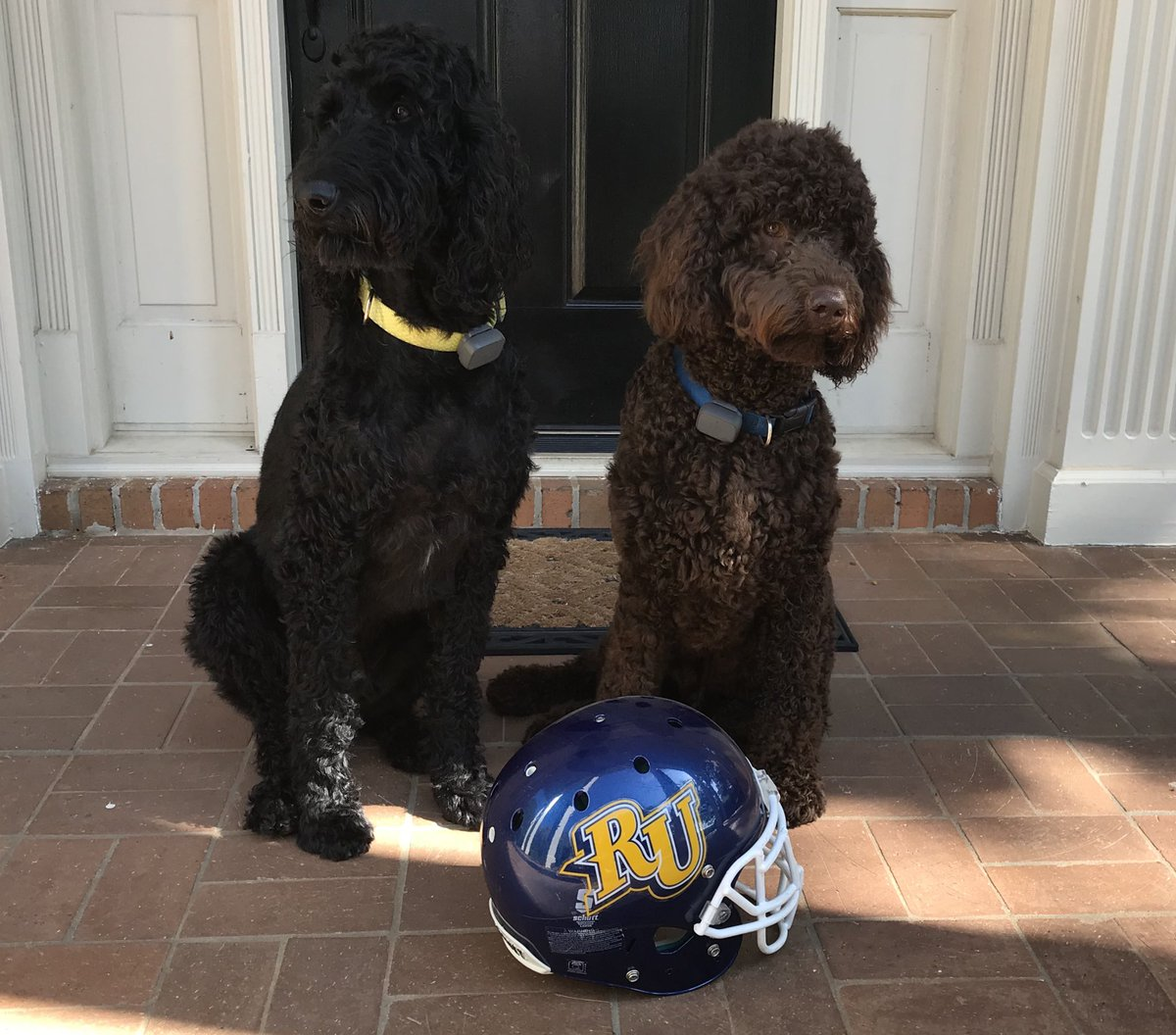 It's Game Day! Bentley and Barney say Go Eagles! #TimetoSoar<br>http://pic.twitter.com/CGUTDnZMsj