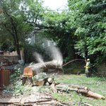 Image for the Tweet beginning: Timber! An action shot of