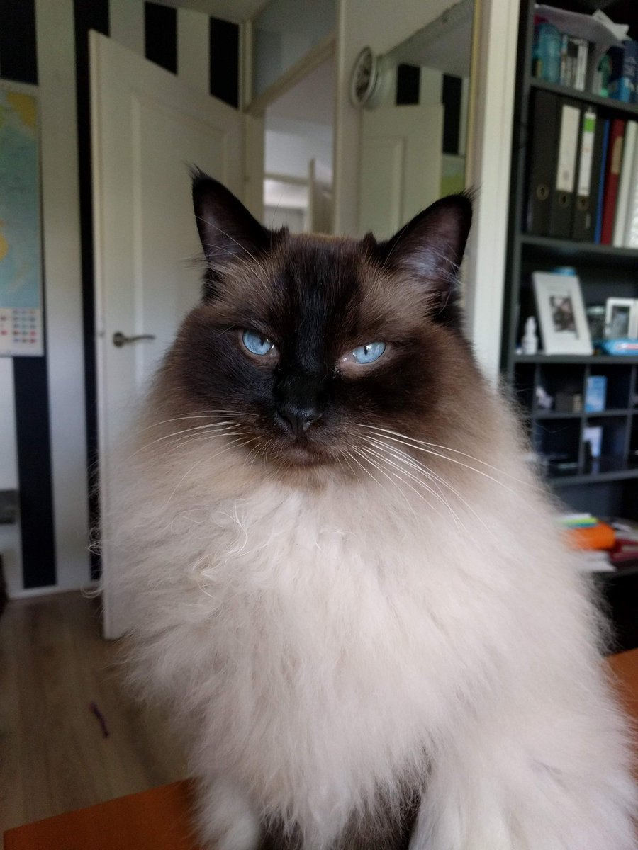 Dexter would like to point out he's thrilled about #Caturday @thechrisbarron<br>http://pic.twitter.com/Ysm26D0L9o