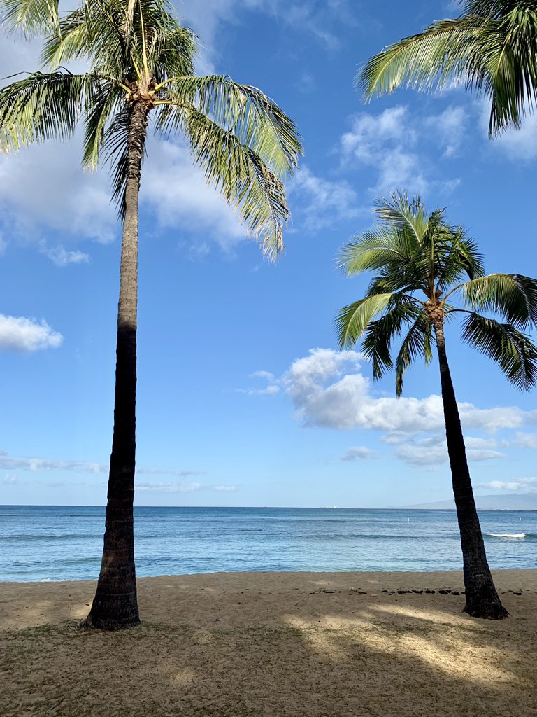 Happy Game Day from Honolulu🏝🏈🅰️ #BearDown – at Waikiki Beach Walls