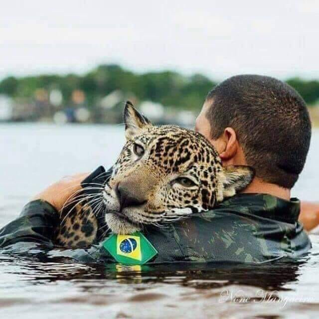 No words.   Rescue photo of one of the animals that threw themselves into the water trying to save themselves from the Amazon Rainforest Fire <br>http://pic.twitter.com/RT9QiykJ2P