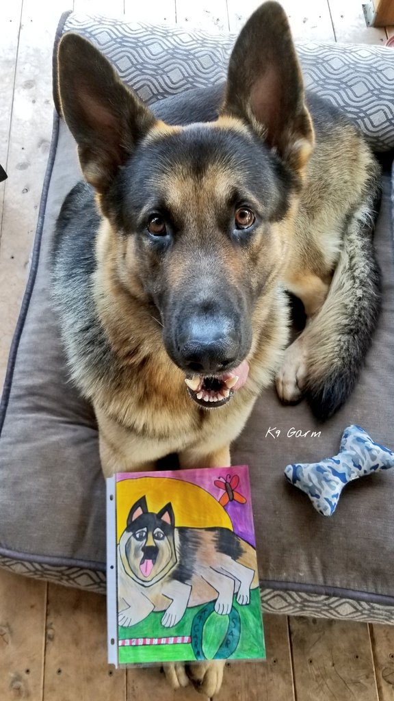 #MoosedogMailCall   thanks to Sarah @SarahCatsCats she drew this for the moose and we both just love it  We have the very best #MoosedogTwitterFam! #K9Garm #SARK9 #dogsoftwitter #dog #dogs #germanshepherd #gsd #moosedog #FaMoose <br>http://pic.twitter.com/KSjqu1FdcL<br>http://pic.twitter.com/7UoqQ7juyN