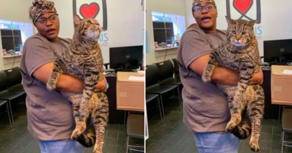 26-pound cat in need of a home becomes viral sensation  https:// cbsn.ws/2ZipkYX    <br>http://pic.twitter.com/PnQBibkB0H