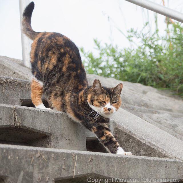 RT @okirakuoki: しっぽ上々。  #cat #ねこ https://t.co/1EaecAl5xx