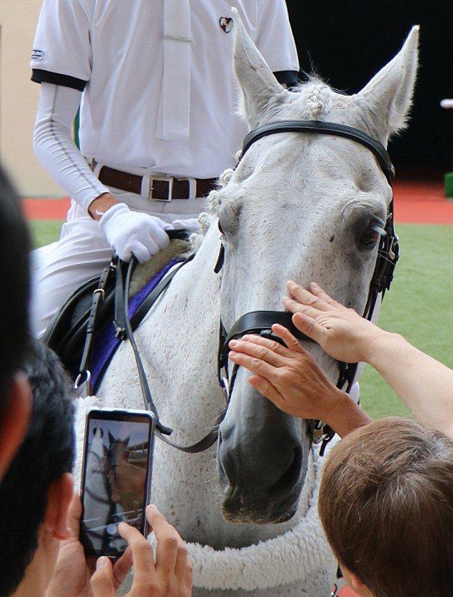 小倉競馬場の誘導馬イラバさん。サラブレッドではなく乗馬用の品種だそうです。てっきり現役を引退して、誘導馬になったサラブレッドなのだとばかり…ビックリ💦💦 とっても大人しくて綺麗なイラバさんです。  (2019.08.25 小倉競馬場)